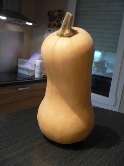 courgebutternut Découverte #2 : La courge butternut